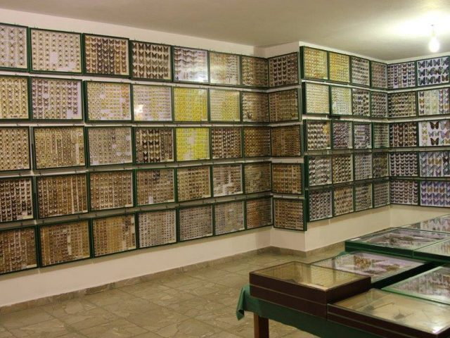 Entomological Museum of Volos